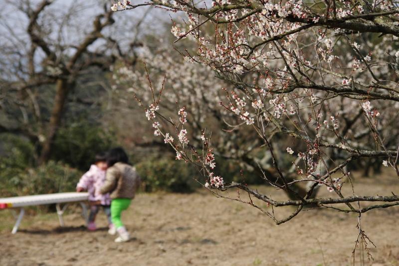 京都新聞写真コンテスト「山里に聞こえる声」