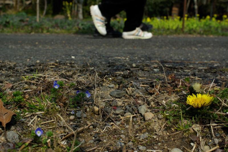 京都新聞写真コンテスト「春めく足音」