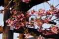 京都新聞写真コンテスト「鐘楼」