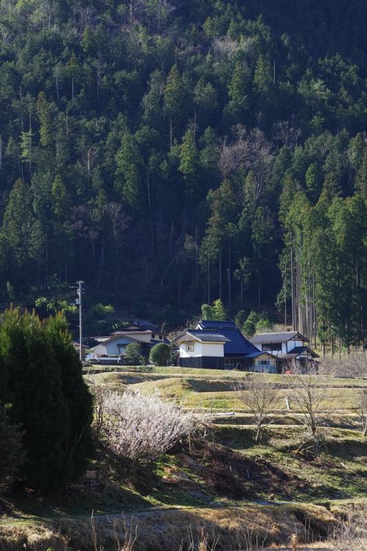 京都新聞写真コンテスト「春光」