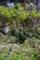 京都新聞写真コンテスト「小さな春景」