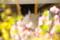京都新聞写真コンテスト「春は眠たいのニャあ~」