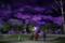 京都新聞写真コンテスト「シュールな夜」