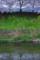 京都新聞写真コンテスト「水温み魚影」