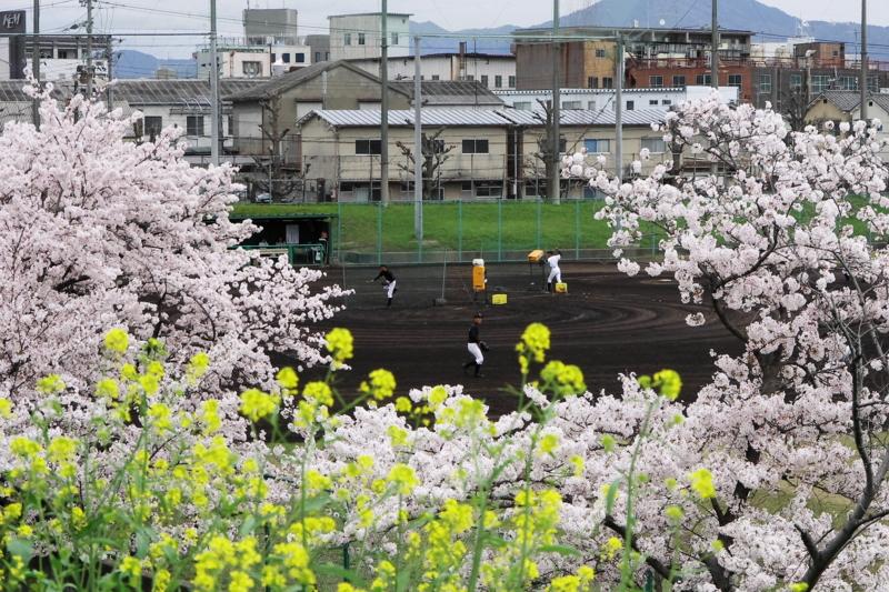 京都新聞写真コンテスト「春のかけ声」
