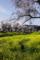 京都新聞写真コンテスト「春日和」