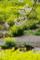 京都新聞写真コンテスト「春色」
