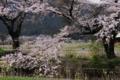 京都新聞写真コンテスト「野良仕事」