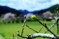 京都新聞写真コンテスト「芽吹き」
