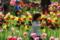 京都新聞写真コンテスト「チューリップ大好き」