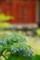 京都新聞写真コンテスト 「咲き始め」