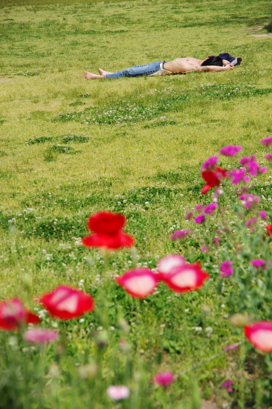京都新聞写真コンテスト 「海に行く前に」