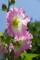 京都新聞写真コンテスト「夏の花」