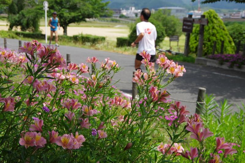 京都新聞写真コンテスト「初夏の汗」