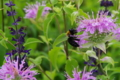 京都新聞写真コンテスト「花と熊蜂」