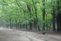 京都新聞写真コンテスト「朝靄の散策」