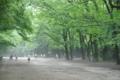 京都新聞写真コンテスト 「夏の朝」