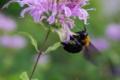 京都新聞写真コンテスト 「花の生涯・蜂の一生」
