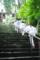京都新聞写真コンテスト 「夏の参拝」