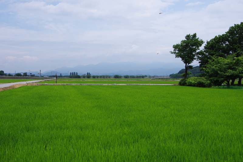 京都新聞写真コンテスト 「トンボ飛ぶ」