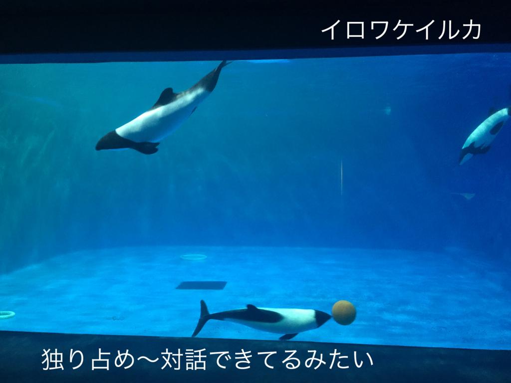 f:id:karutakko-muratan:20171121111144j:plain