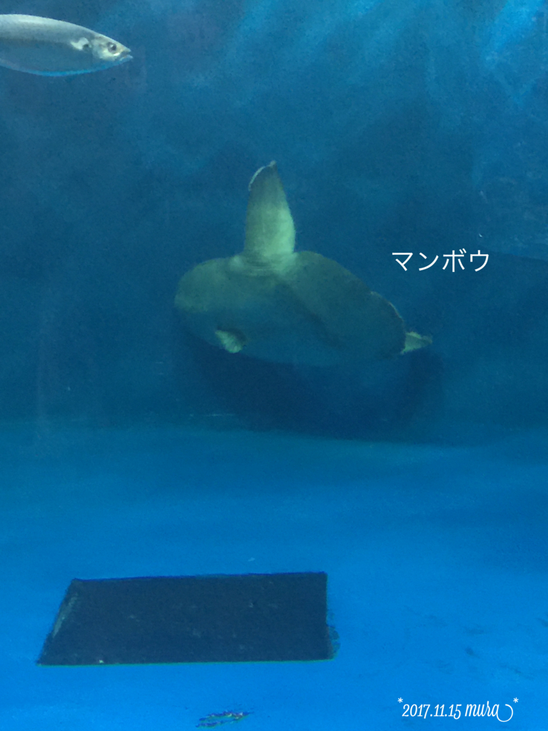 f:id:karutakko-muratan:20171121111249j:plain