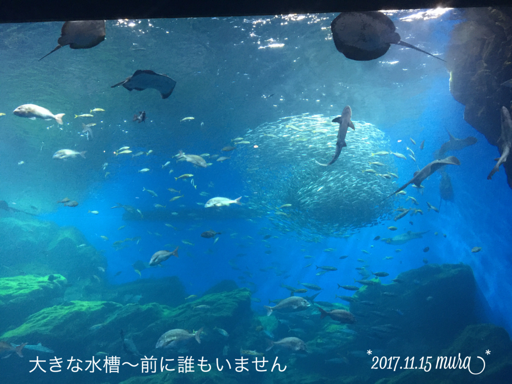 f:id:karutakko-muratan:20171121111313j:plain