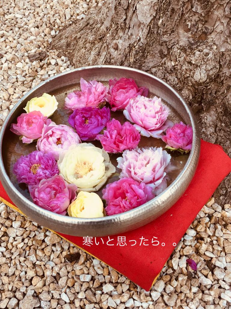 f:id:karutakko-muratan:20180210063351j:plain