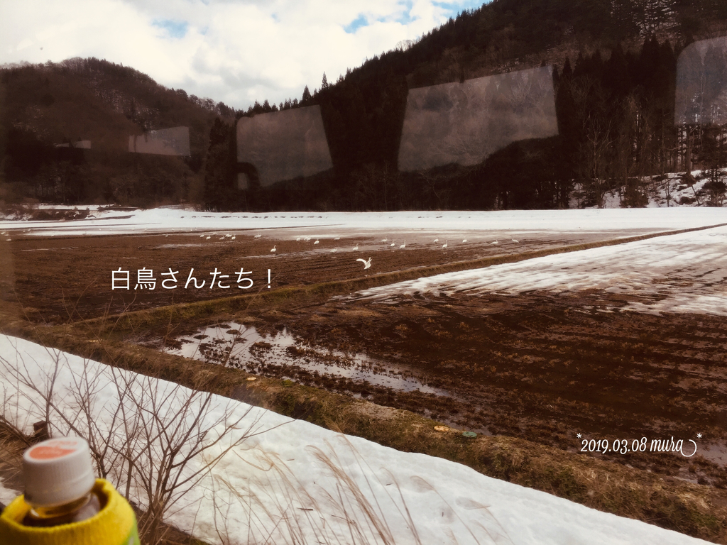 f:id:karutakko-muratan:20190310022001j:plain