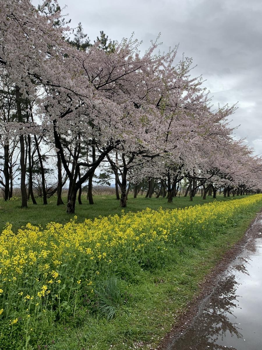 f:id:karutakko-muratan:20190501114658j:plain
