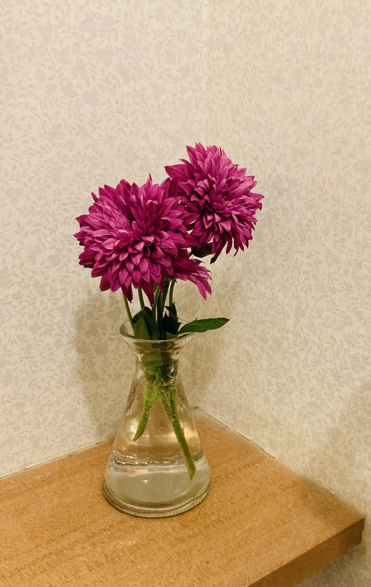 f:id:karutakko-muratan:20190515114821j:plain