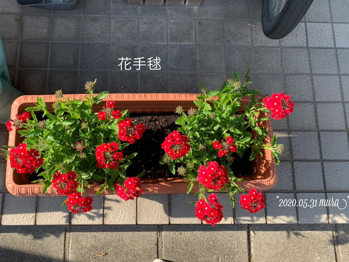 f:id:karutakko-muratan:20200601084804j:plain
