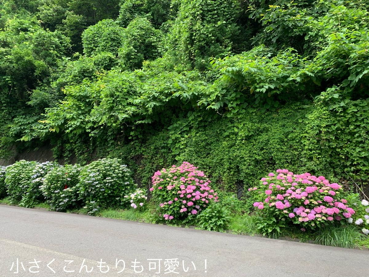 f:id:karutakko-muratan:20200706102039j:plain