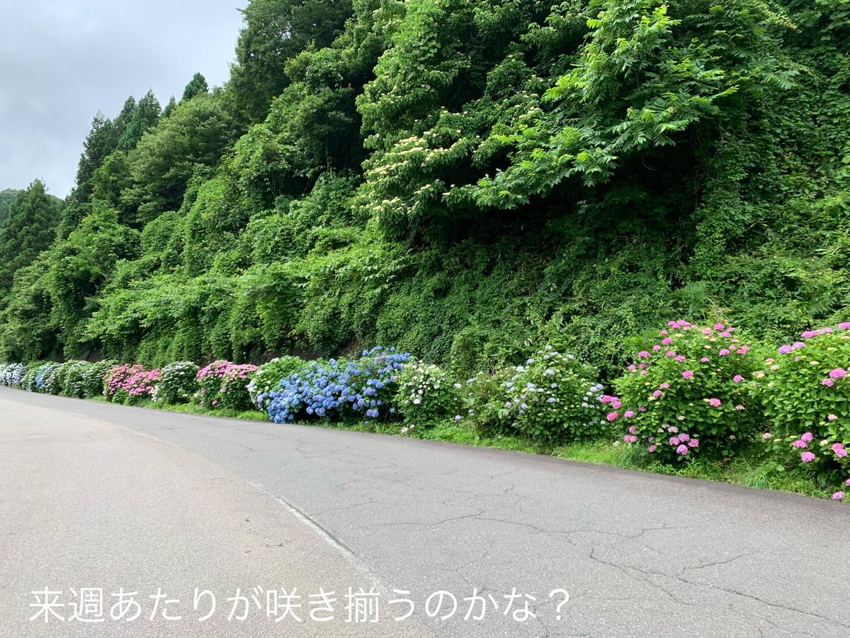 f:id:karutakko-muratan:20200706102054j:plain