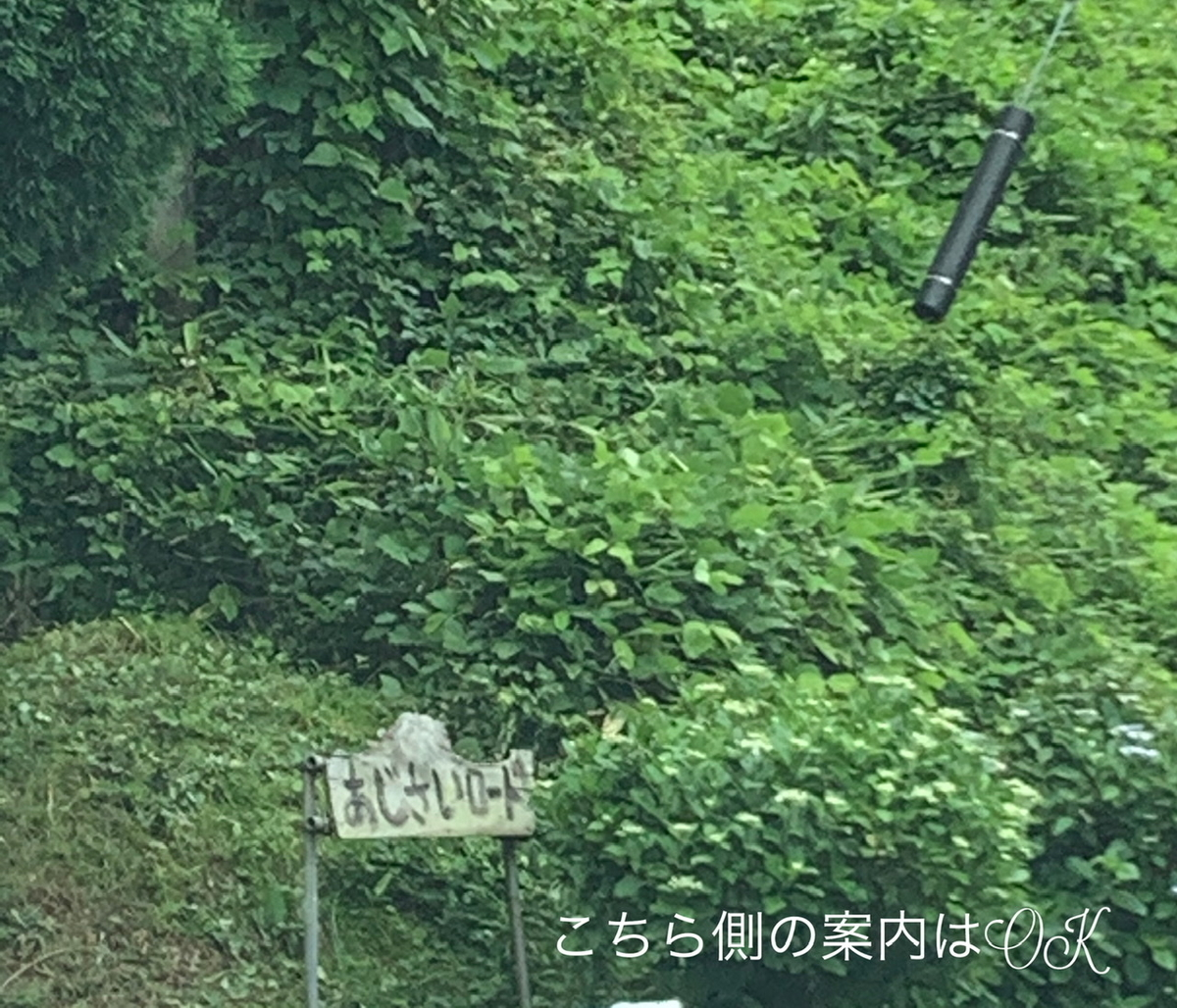 f:id:karutakko-muratan:20200706102114j:plain