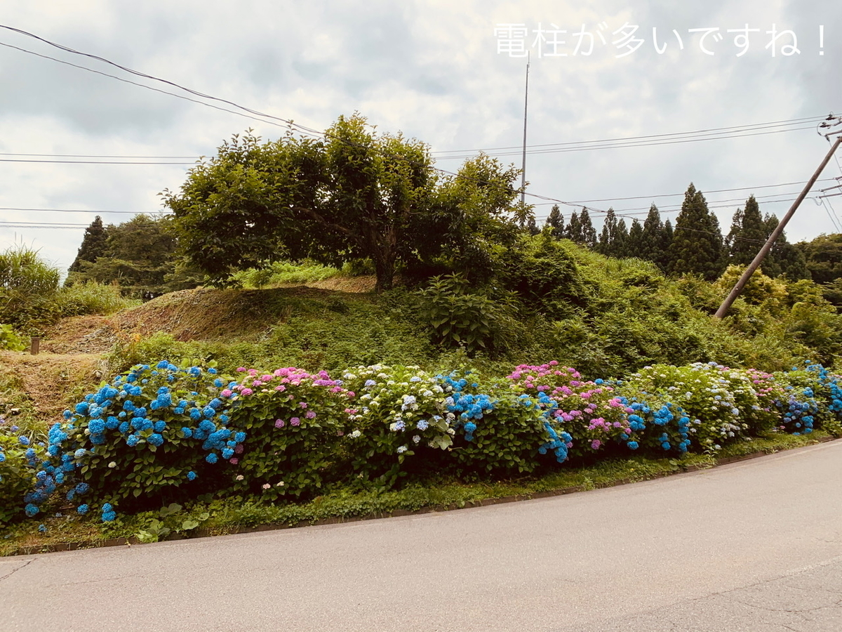 f:id:karutakko-muratan:20200706102130j:plain