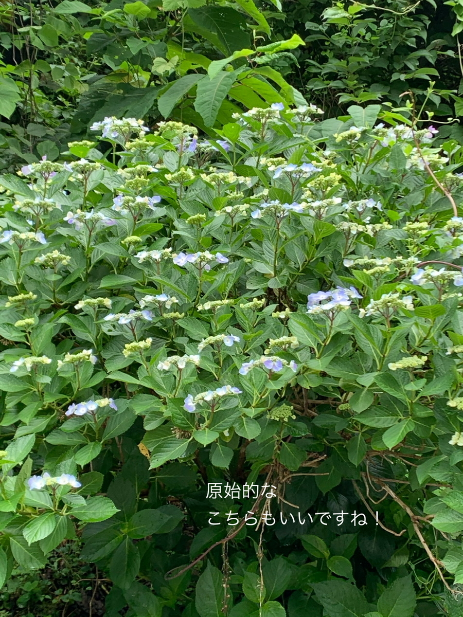 f:id:karutakko-muratan:20200706102456j:plain