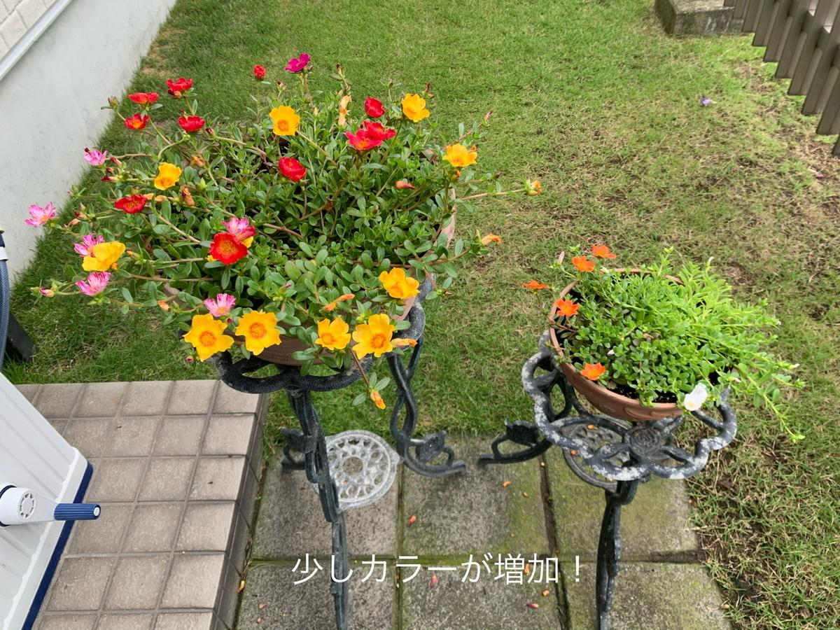 f:id:karutakko-muratan:20200710102531j:plain
