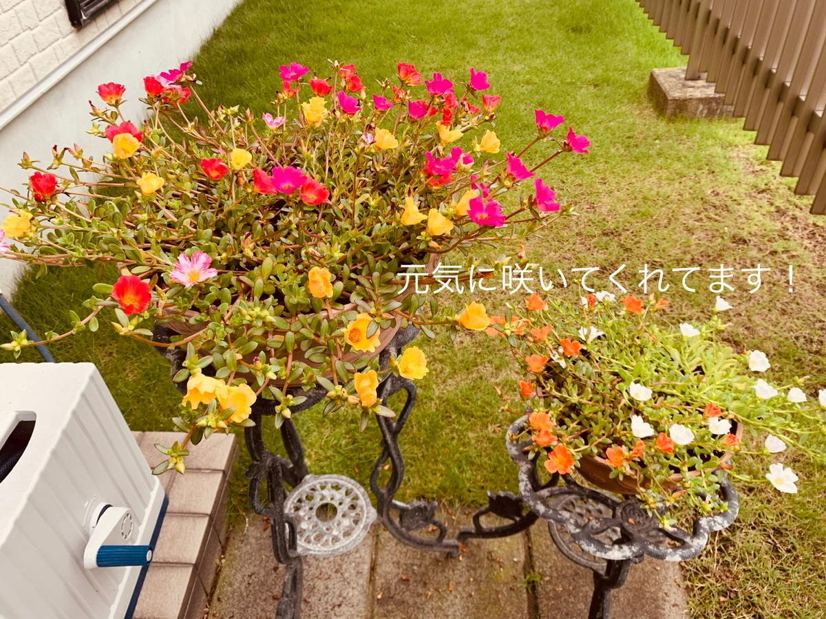 f:id:karutakko-muratan:20200801101207j:plain