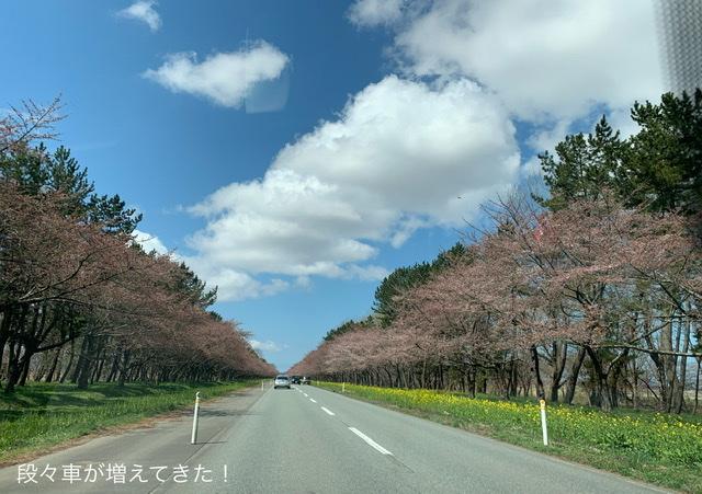 f:id:karutakko-muratan:20210412090449j:plain