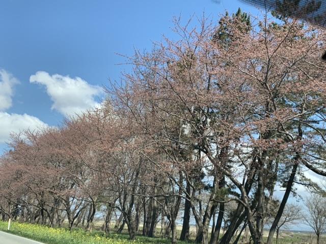 f:id:karutakko-muratan:20210412090653j:plain