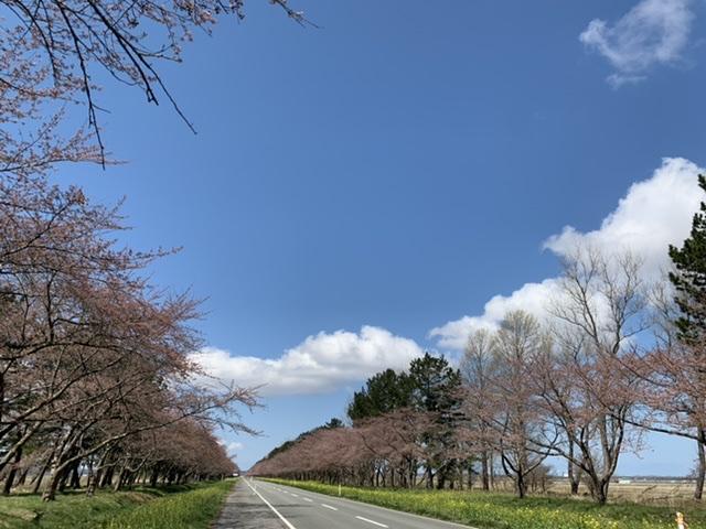 f:id:karutakko-muratan:20210412101004j:plain