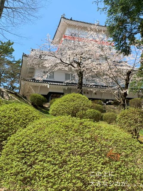 f:id:karutakko-muratan:20210413110159j:plain