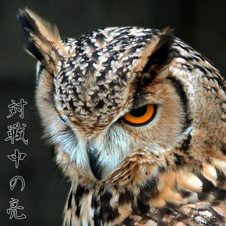 f:id:karutaru:20121119151319j:image:w250