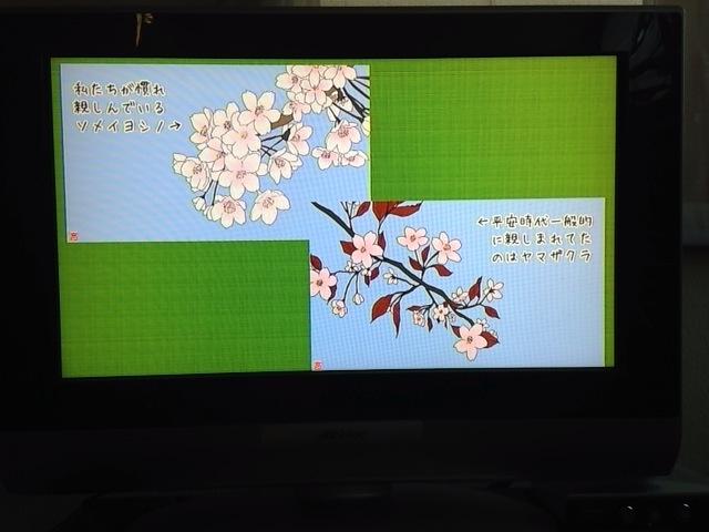 f:id:karutaru:20150409055415j:image:w480