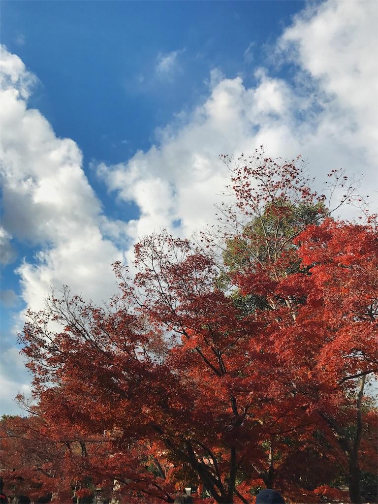 青空に白い雲が浮かび手前のもみじが真っ赤に紅葉している写真