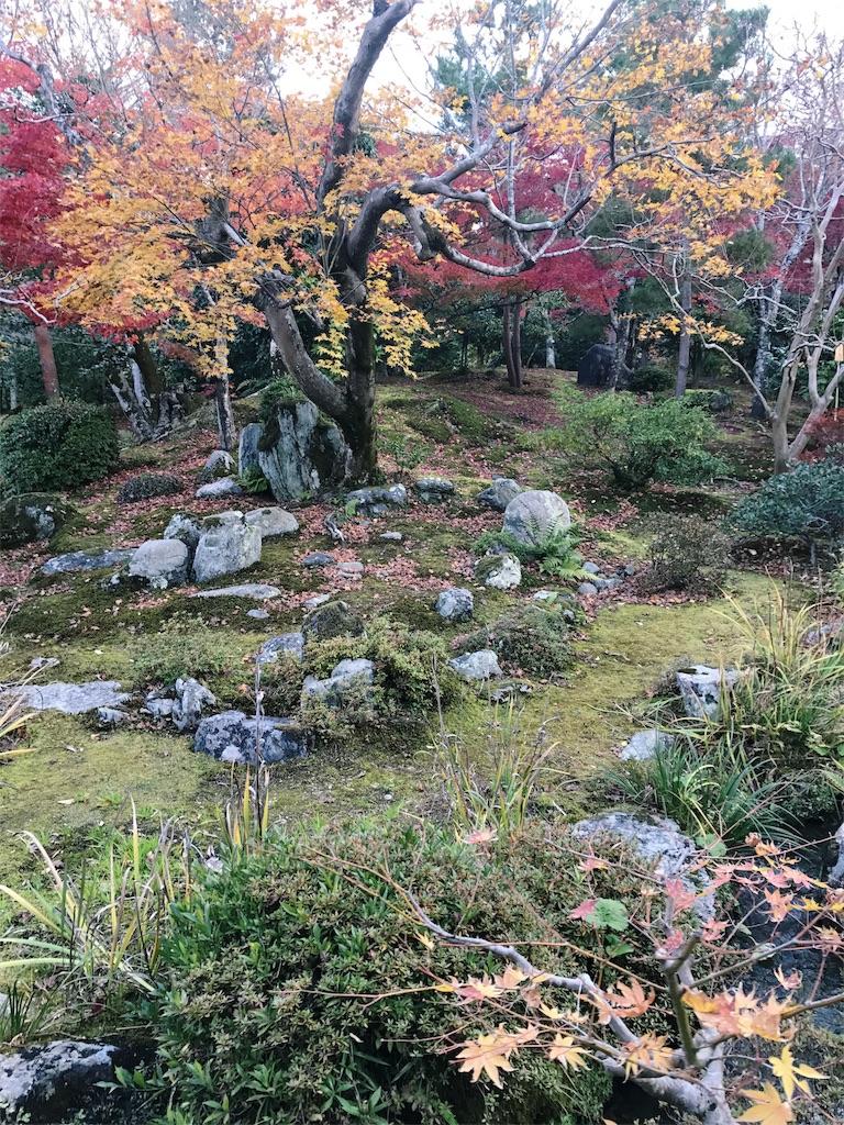 天龍寺の庭山に紅葉した木々が植えられている写真