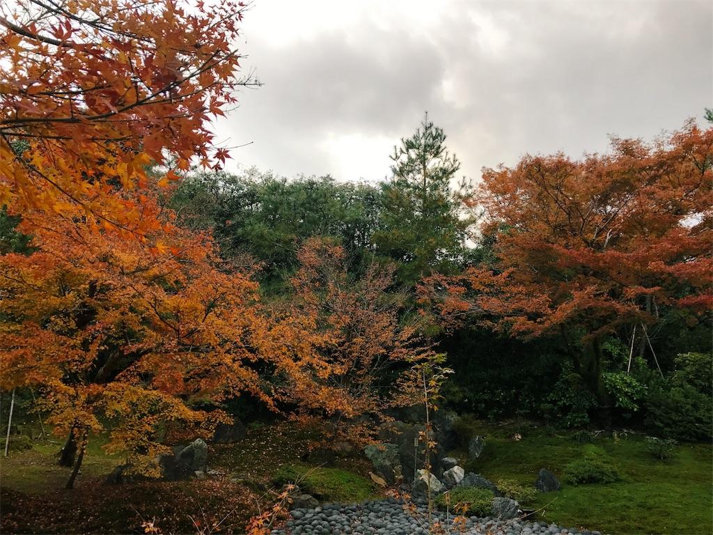 曇り空の下紅葉した木々が広がる写真