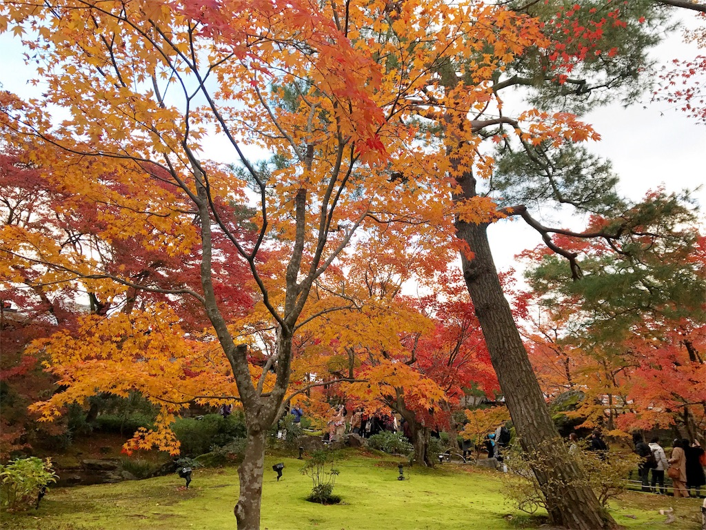 宝厳院の庭は地面が苔で黄緑色をしていてそこに紅葉している木々が並ぶ写真
