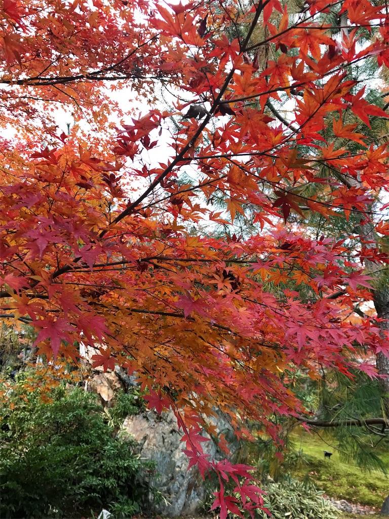 緑の木々の手前に真っ赤な紅葉した木が写っている写真